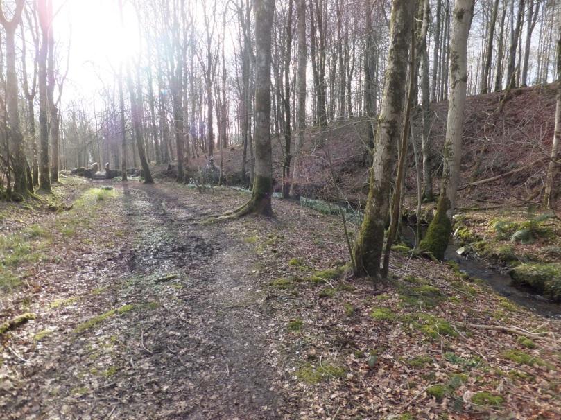 Cally Forest Walk